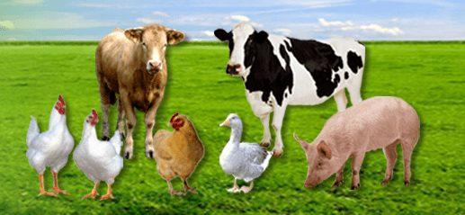 hợp quy thức ăn chăn nuôi, qcvn-01-183-2016-bnnptnt